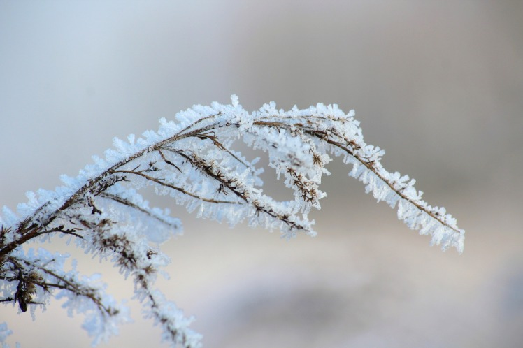 frost-3944523_1920